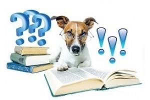 16 грубых ошибок собаковода в воспитании щенка