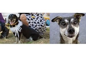 В Израиле состоится первая выставка беспородных собак