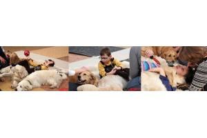 Собаки – терапевты теперь есть и в Омске