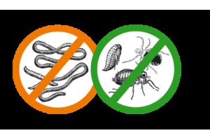 Берегите собаку от паразитов