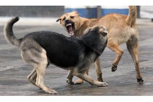 Человек и бездомные собаки
