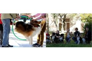 Цирковая дрессировка собак юными кинологами