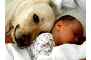 Спасение младенца дворнягой