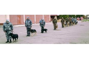 Дрессировка служебных собак для полиции