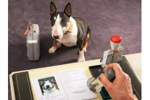 Обязательная регистрация собак