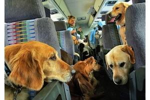 Рост тарифов на авиаперевозку собак