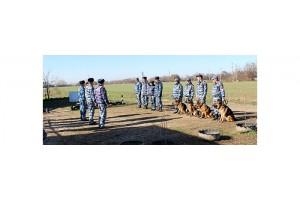 На Ставрополье прошёл турнир служебных собак по многоборью