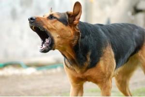 Хозяйка ответит за нападение собаки