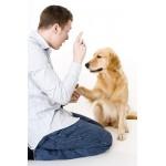 """Курс """"Обучающаяся и развивающаяся собака"""""""