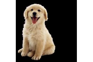 Статьи о собаках