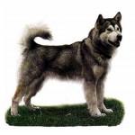 Дрессировка Гренландской собаки (Гренландсхунд)