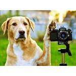 Фотографы для собак