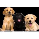 Подбор и выбор щенков