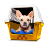 Зоотакси для собак