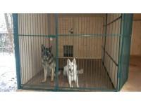 Строительство Зоогостиницы - Передержки собак в Одинцово